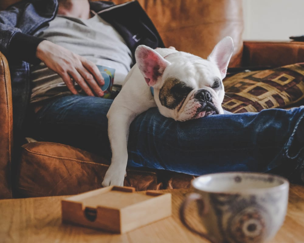 Resident pup and his owner relaxing on the couch in their new apartment at Olympus Encantada in Albuquerque, New Mexico