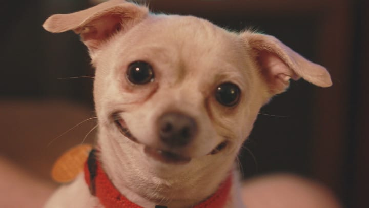 A small dog that is smiling