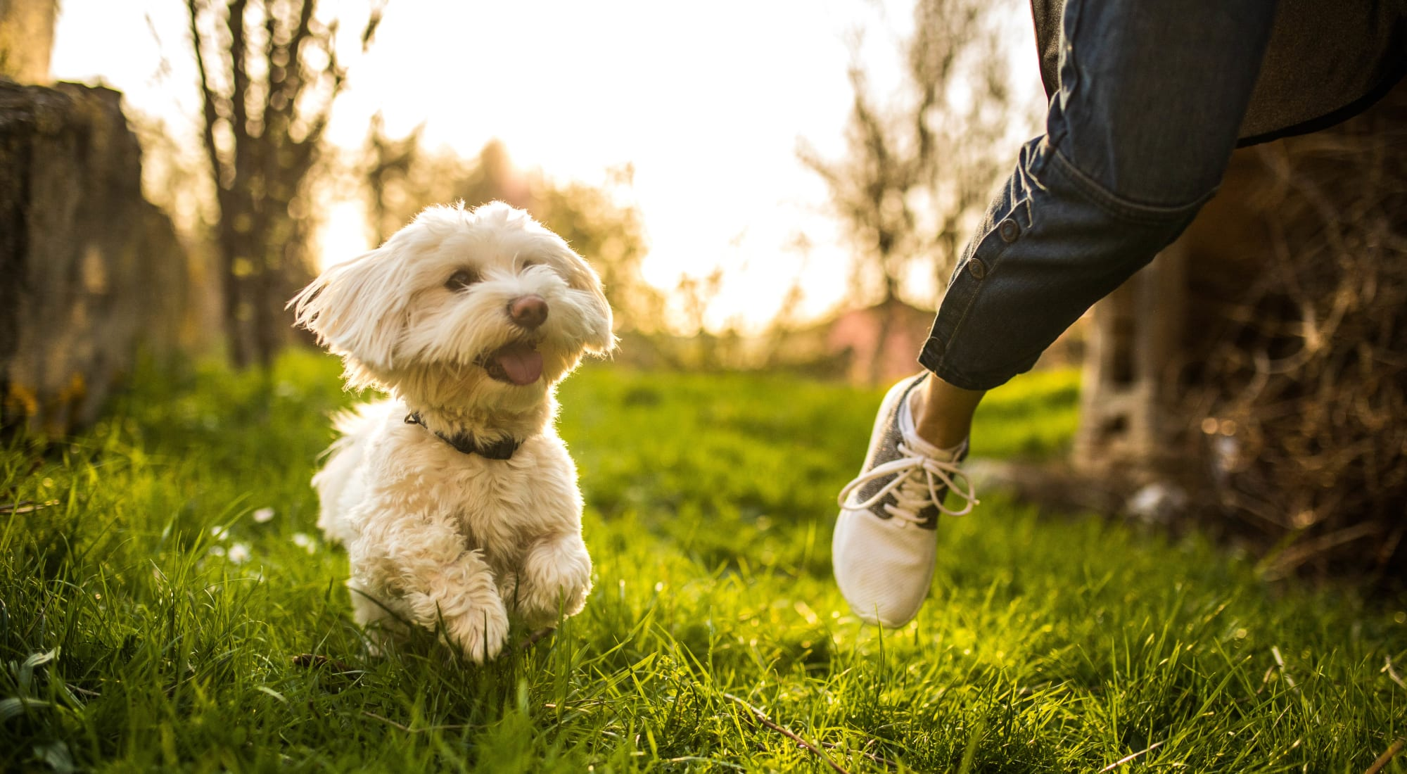 Pet-friendly apartments at Racquet Club Apartments and Townhomes in Levittown, Pennsylvania