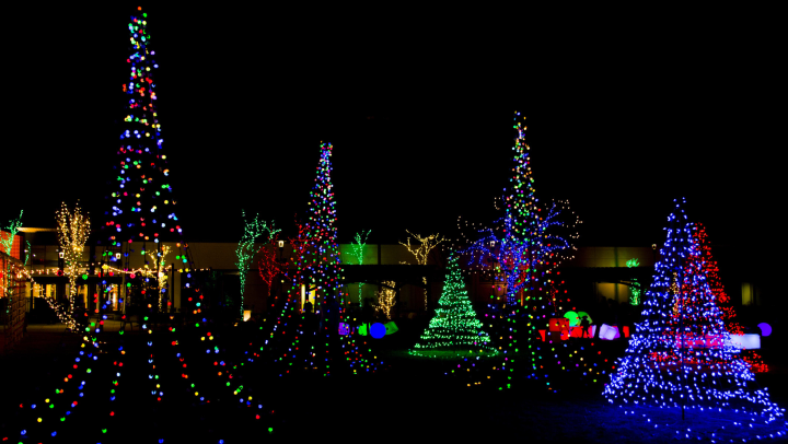 Holiday tree lights on display during the nighttime