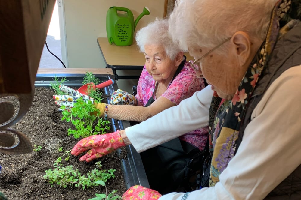 senior residents planting herbs