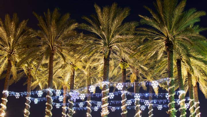 Palm trees lit up with holiday lights.