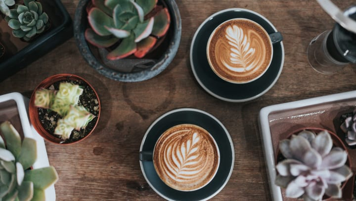 Beautifully presented lattes on a table with succulents at a café near Union at Carrollton Square in Carrollton, Texas