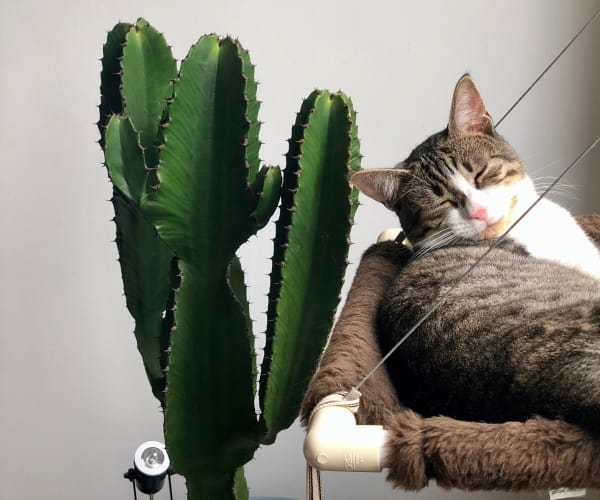 Cat taking a nap near a cactus