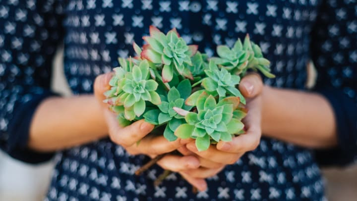 A young woman is holding a handful of succulent plants.