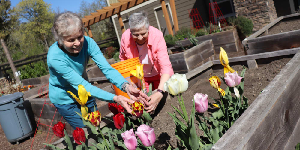Two residents gardening at The Springs at Greer Gardens in Eugene, Oregon