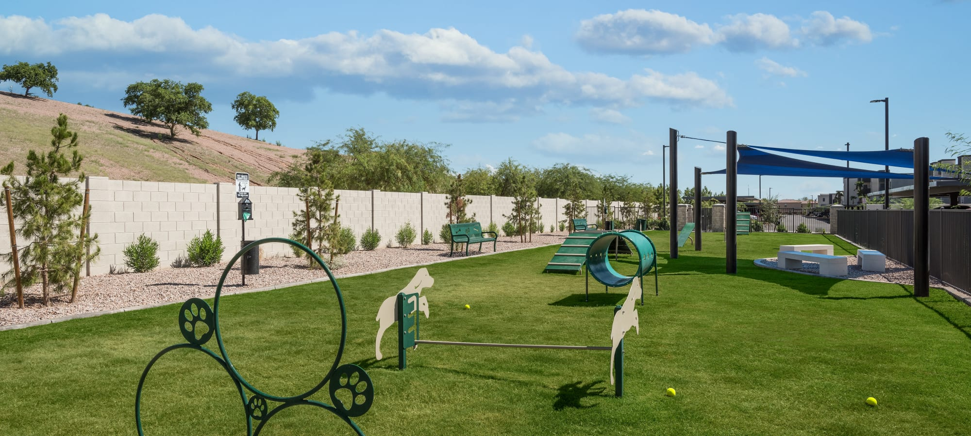 Dog park at Aviva in Mesa, Arizona