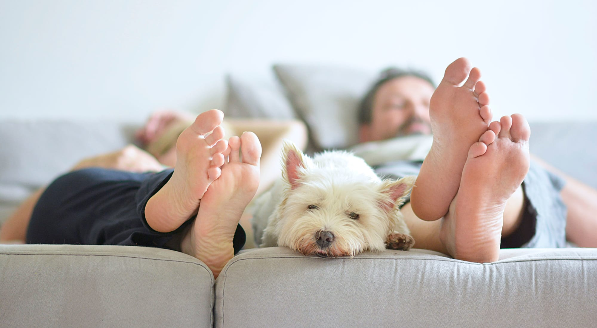 Pet-friendly apartments at The Hamptons at Town Center in Germantown, Maryland
