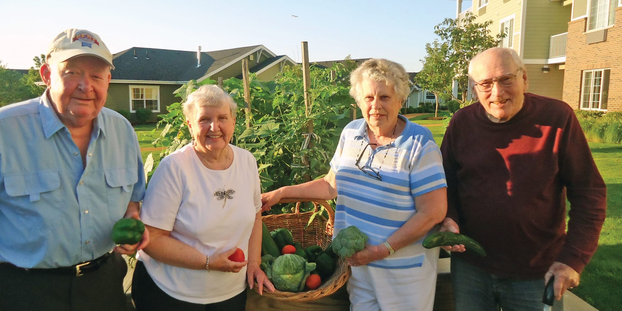 A group of residents harvesting the garden at Guelph Lake Commons in Guelph, Ontario