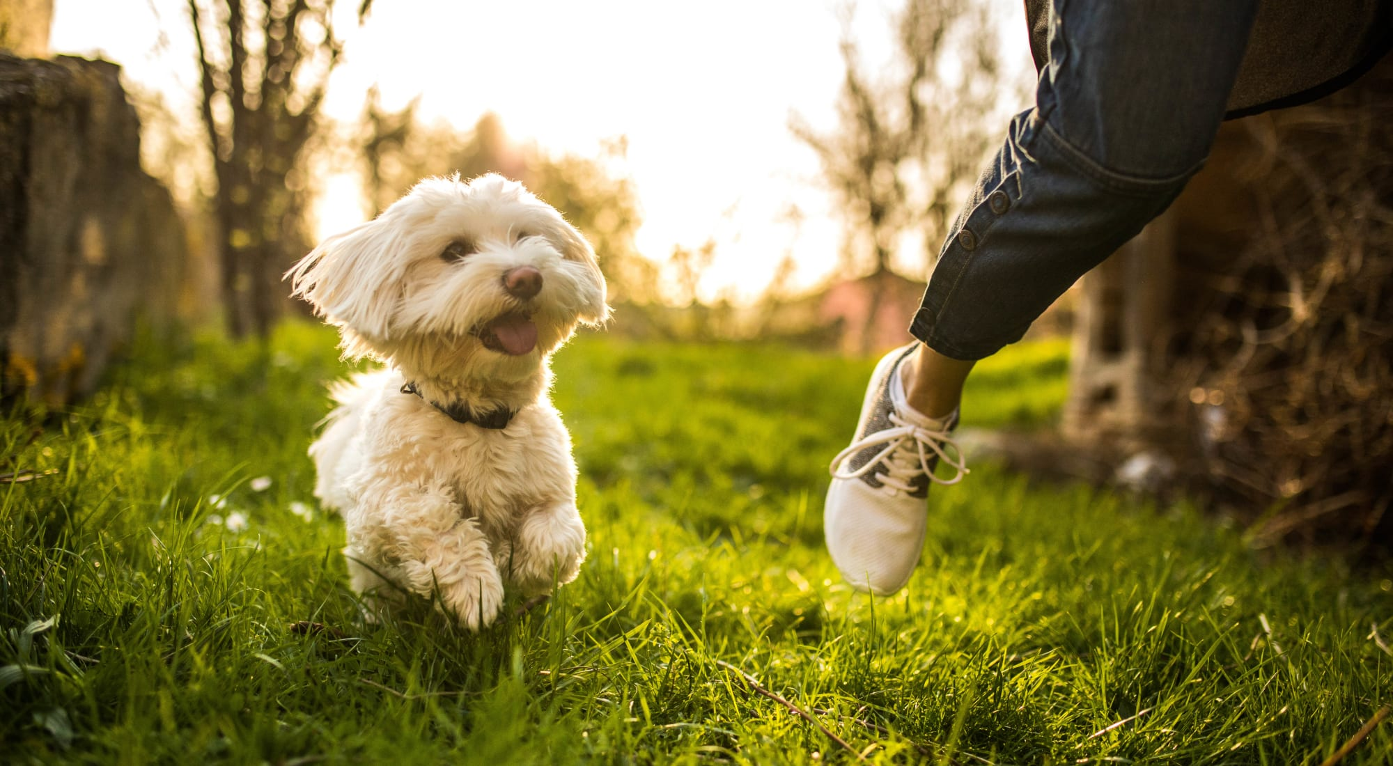Pet-friendly apartments at Country Village Apartments in Bel Air, Maryland