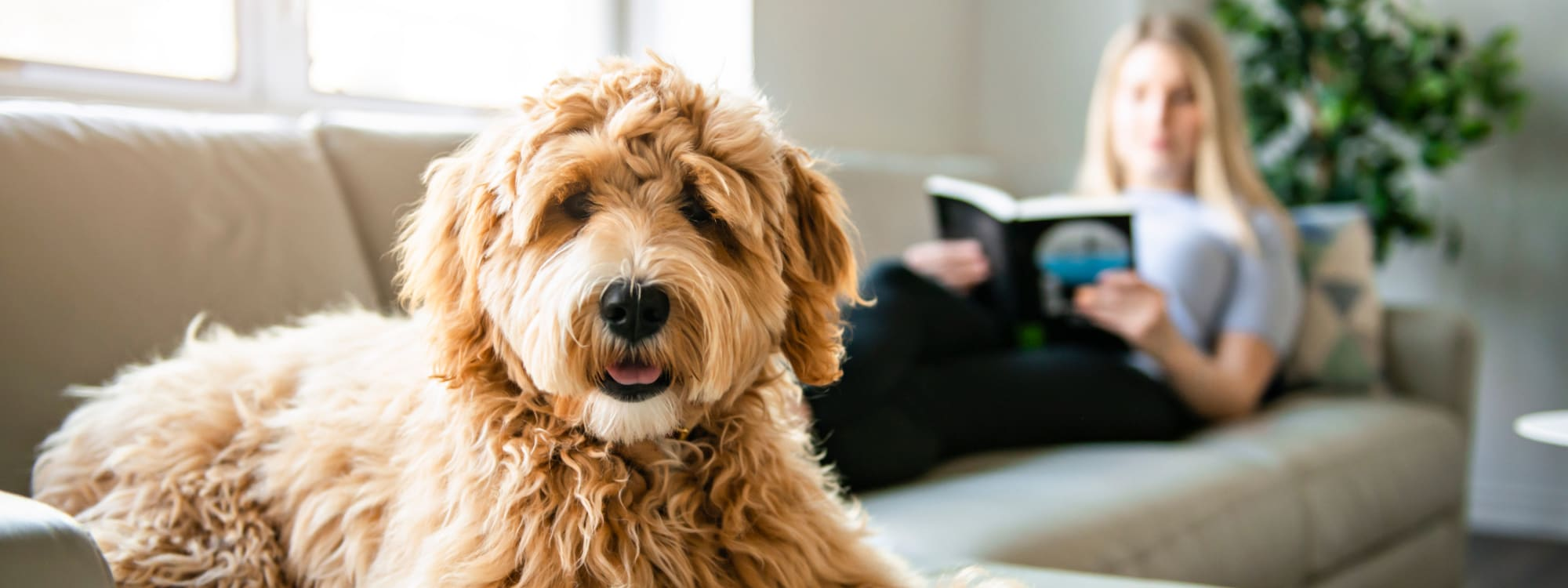 Prairie Shores's pet policy in Chicago, Illinois