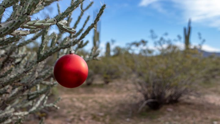 Single red ornament hanging on a cactus