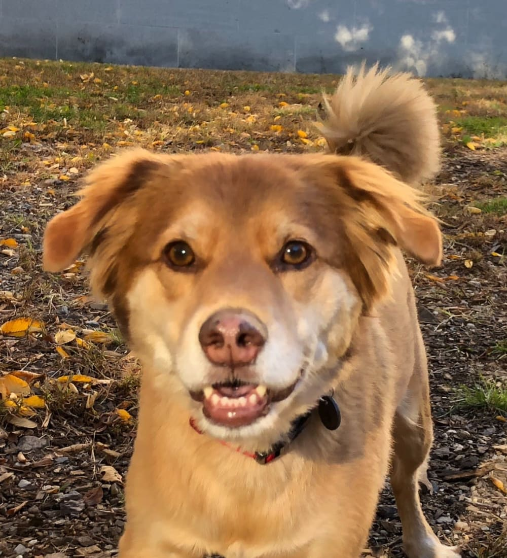 Happy dog outside at Chestnut Hill Tower in Philadelphia, Pennsylvania