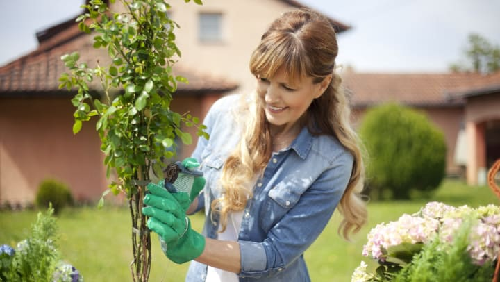 Smiling woman in a yard trimming plants.