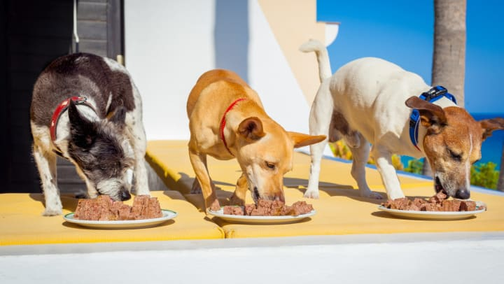 Three dogs eating off plates