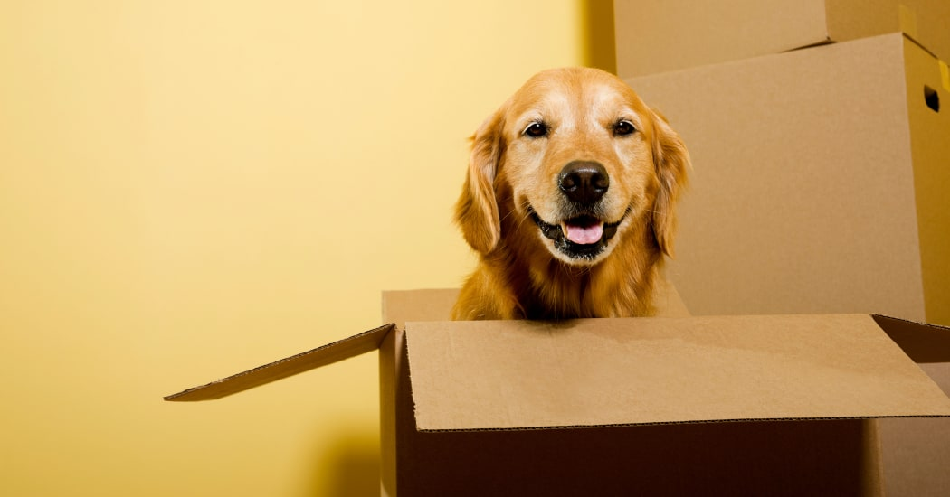 Dog in a box helping his masters move their belongings to one of our Storage Star locations