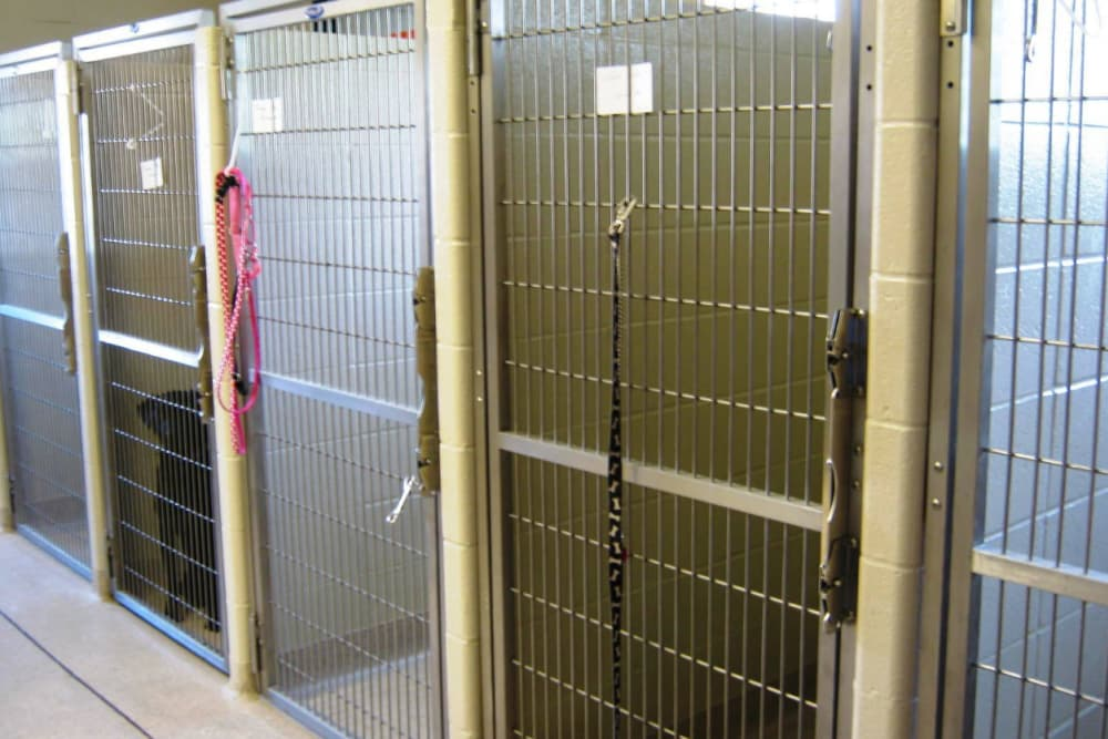 Canine kennels at Niles Veterinary Clinic in Niles, Ohio