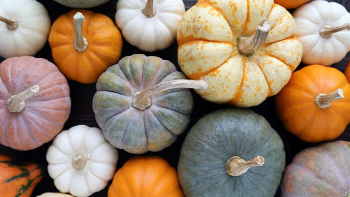 Group of colorful small pumpkins at Union at Carrollton Square