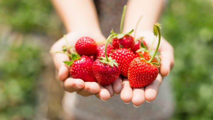 Closeup of hands holding strawberries