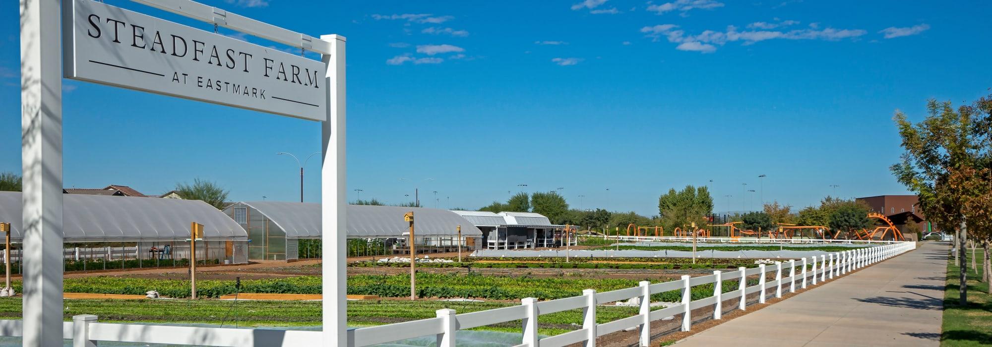 Steadfast Farm near BB Living at Eastmark in Mesa, Arizona