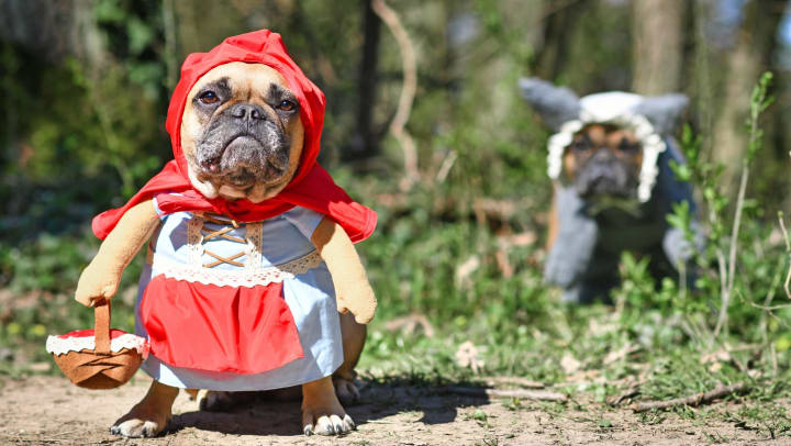 Dogs dressed in Halloween costumes outside their Anatole at Briarwood property