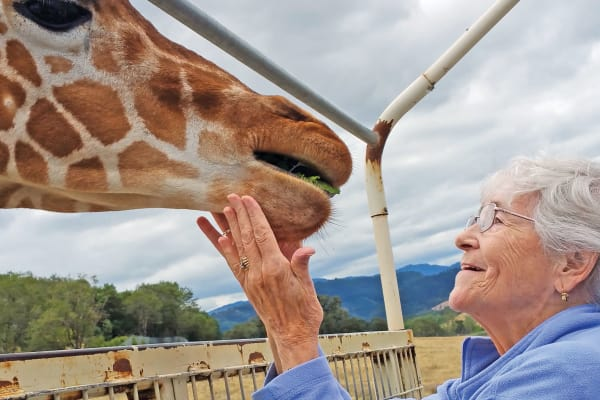 A resident from El Dorado Estates Gracious Retirement Living in El Dorado Hills, California petting a giraffe