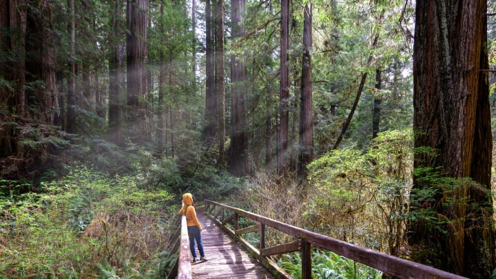 Person standing on a wooden bridge in the forest looking up at the trees.