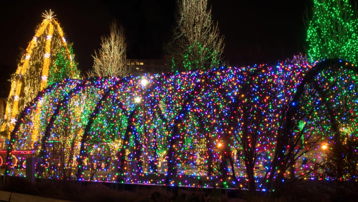 Festive lights making a tunnel with trees around