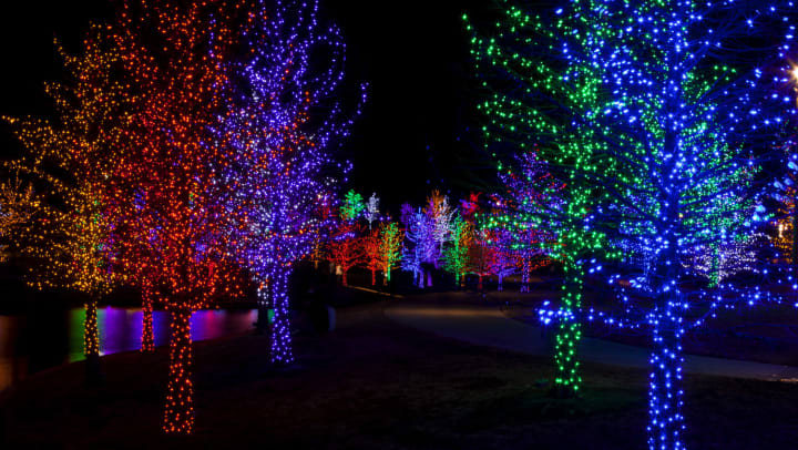 Outdoor trees strung with lights at the Houston Zoo