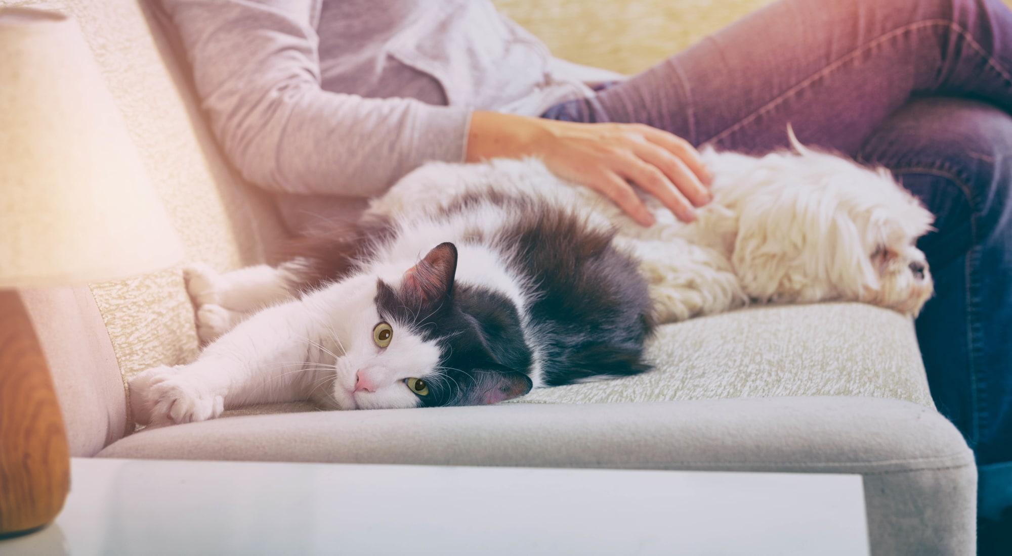 Pet-friendly apartments at The Corners at Crystal Lake in Winston Salem, North Carolina