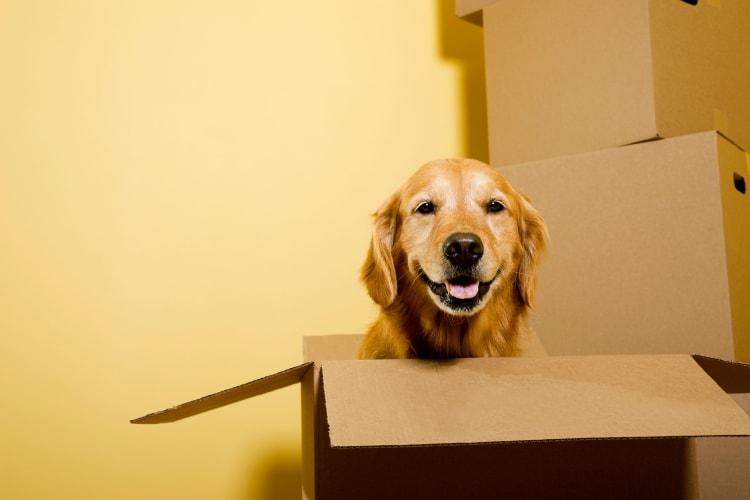 Dog helping his master prepare to move their belongings to Storage Star in Roy, Utah