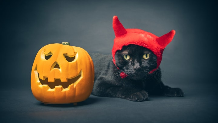 Black cat wearing a devil ears costume next to a jack o