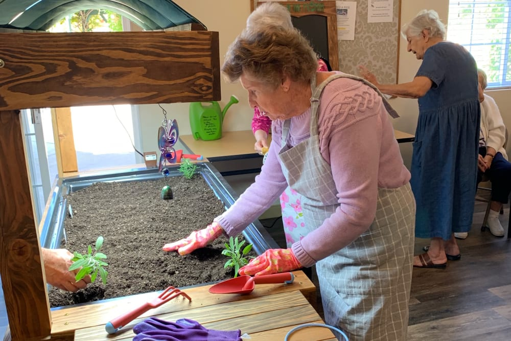 Senior residents enjoying gardening