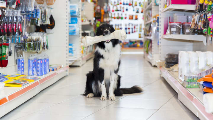 Dog picking out some treats at a pet store near Mirador & Stovall at River City in Jacksonville, Florida