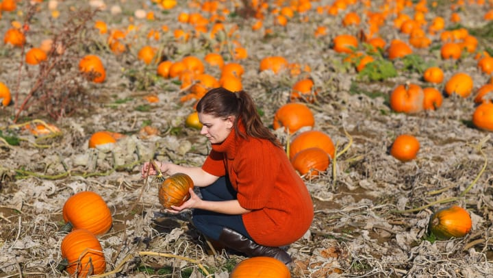 Woman picking out pumpkins at a patch near Olympus at the District