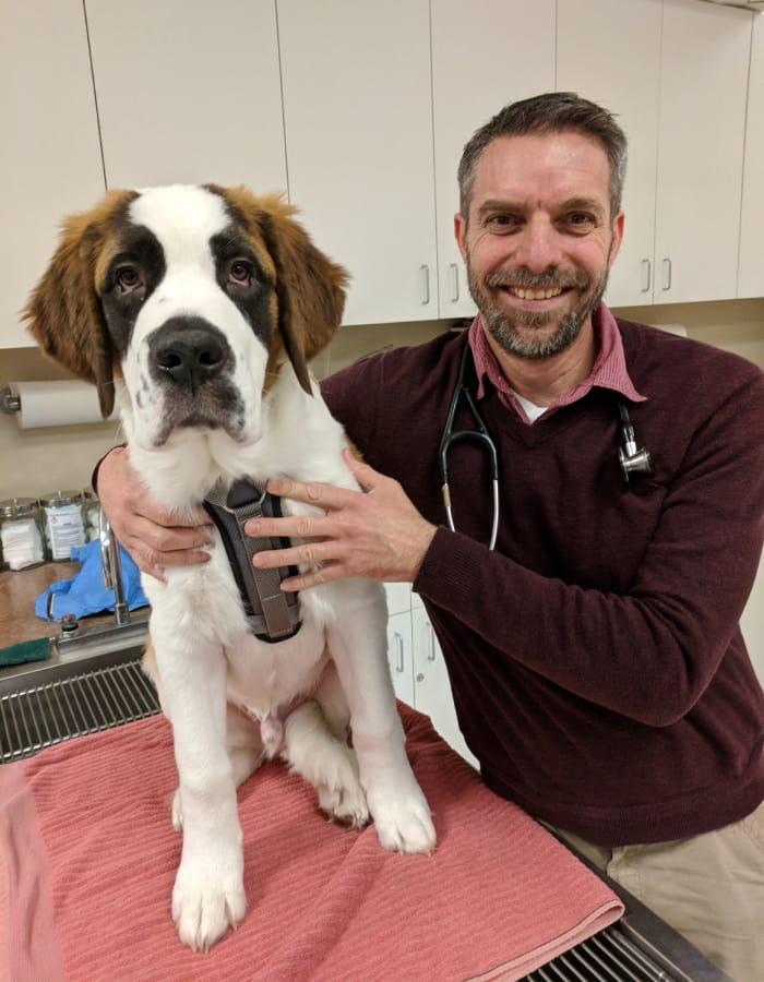 Dr. Hendershot at Value Pet Clinic - Tacoma