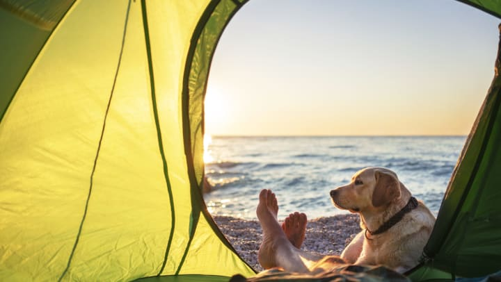 A man laying in a tent looks out at the ocean through the open tent door as his dog lays right outside.