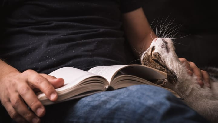 Man holding an open book in his lap while petting a cat with one hand.