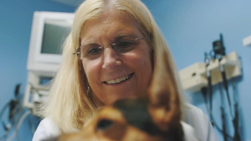 North Paw Animal Hospital Testimonial