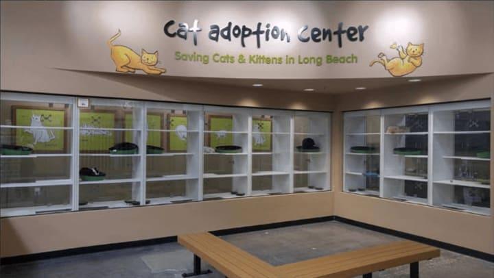 Pet Food Express Cat Adoption