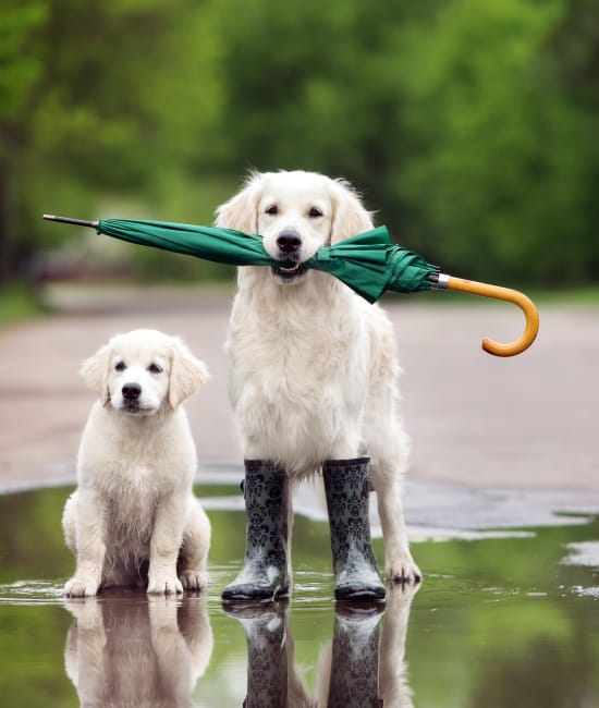 Pets holding umbrellas at Haddon Place in McDonough, Georgia