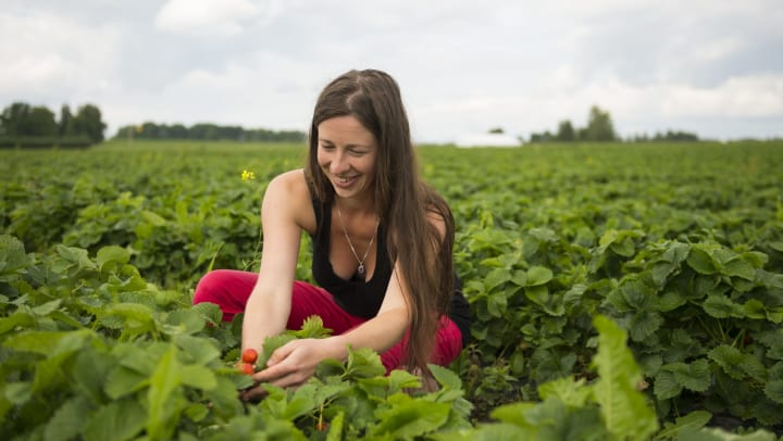 A smiling woman picking strawberries in a field.
