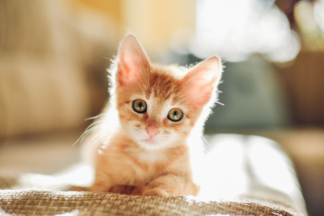 Kitten at Van Deene Manor in West Springfield