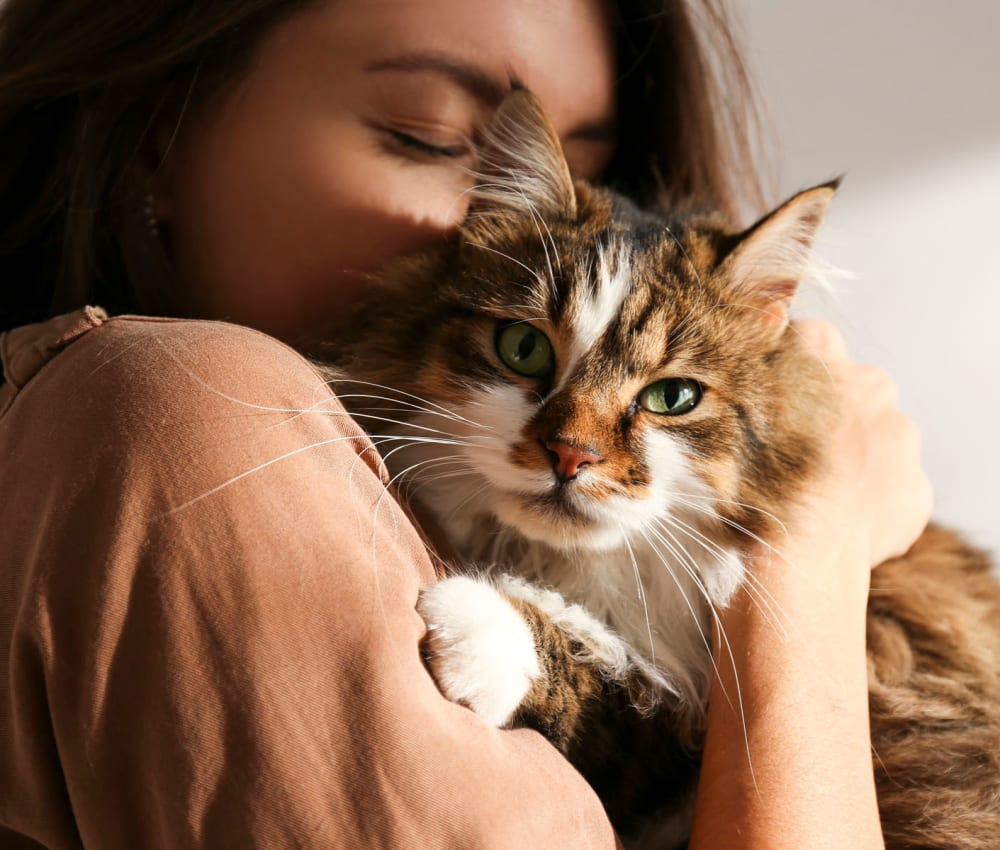 Resident hugging her cat in their new home at Sunset Barrington Gardens in Los Angeles, California