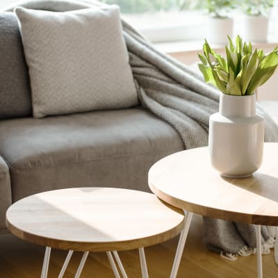 Modern style sofa with side tables and plant at Terra Apartment Homes in Federal Way, Washington