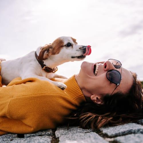 Happy dog near Encore Tessera in Phoenix, Arizona