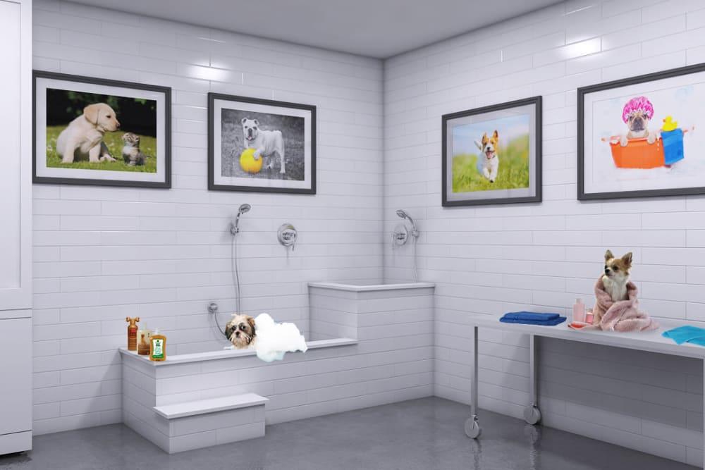 Rendering of Tribeca's onsite dog washing station in Saint Louis, Missouri