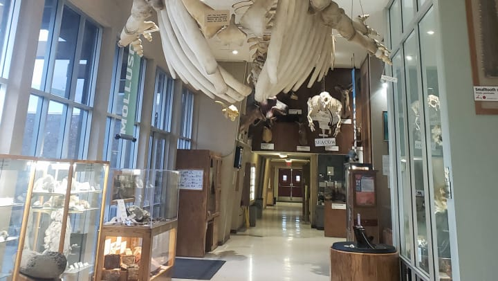 Sierra College Natural History Museum Rocklin CA