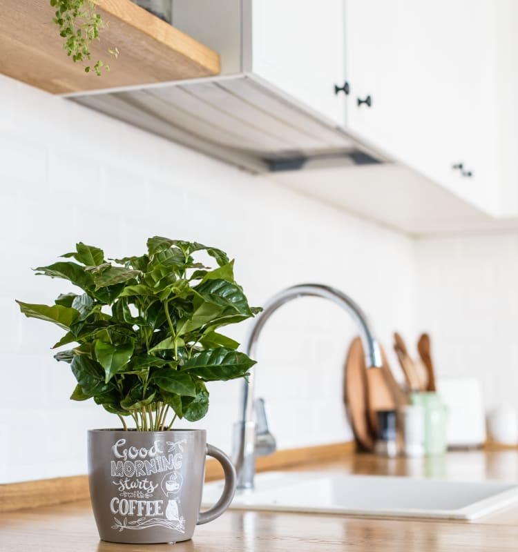 Bright, clean kitchen with an indoor plant at Valley West Apartments in San Jose, California