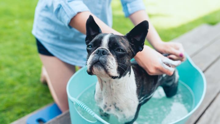 Resident giving her dog a bath at their new home at an Olympus Property Management community
